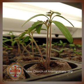 PlantBabies