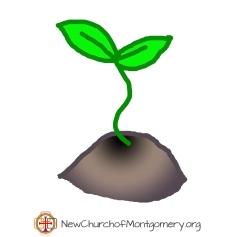 seedling-ncom