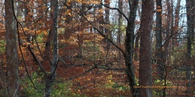 ncom-sharon-woods