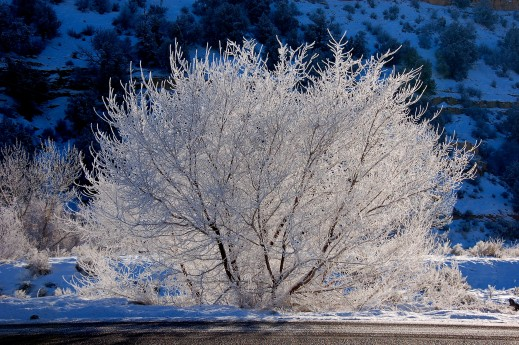 Winter_tree_covered_by_snow 1-18-18