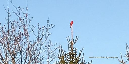 ncom-cardinal